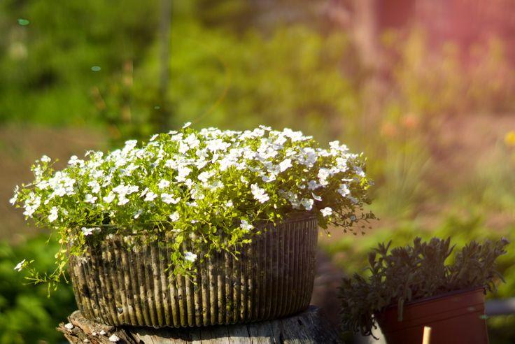 огород, горшок с цветами, весна