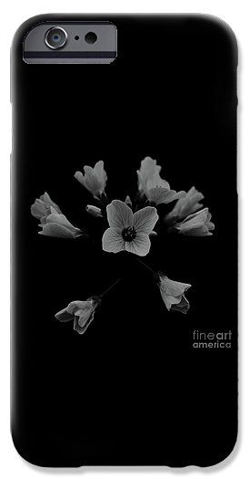 Cuckooflower IPhone 6s Case for Sale by Sverre Andreas Fekjan.  Protect your iPhone 6s with an impact-resistant, slim-profile, hard-shell case.  The image is printed directly onto the case and wrapped around the edges for a beautiful presentation.  Simply snap the case onto your iPhone 6s for instant protection and direct access to all of the phone's features!