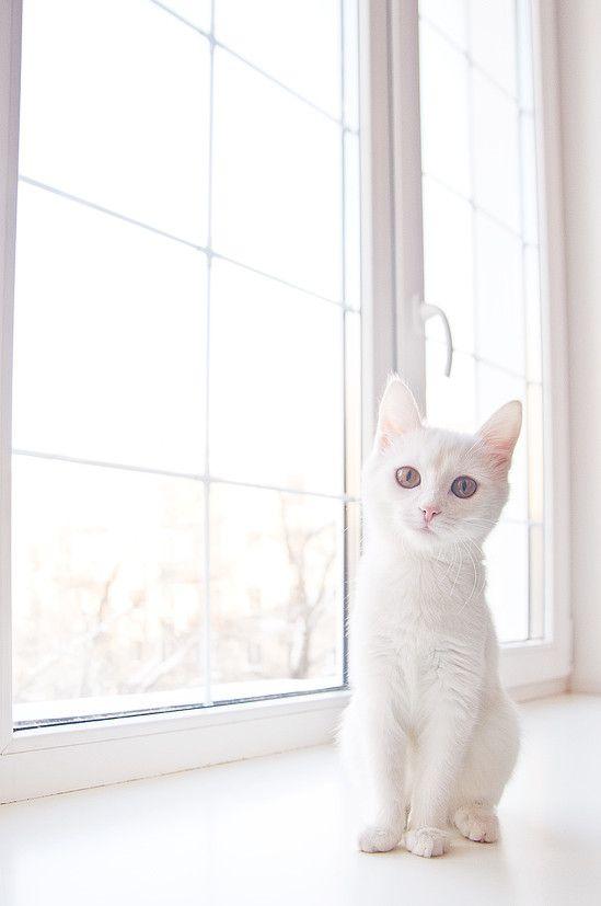 pure white cuteness...