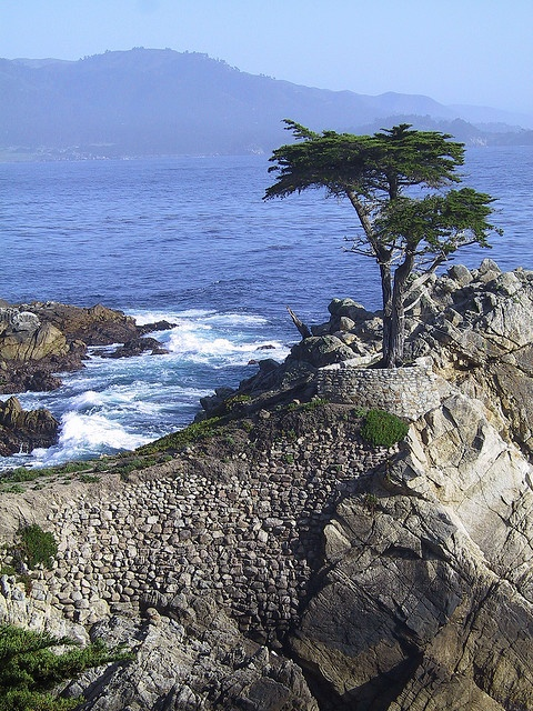 This was such a gorgeous drive, worth more than the few bucks req. to drive through it! (Carmel, California, US.  Taken on the 17 mile drive.)