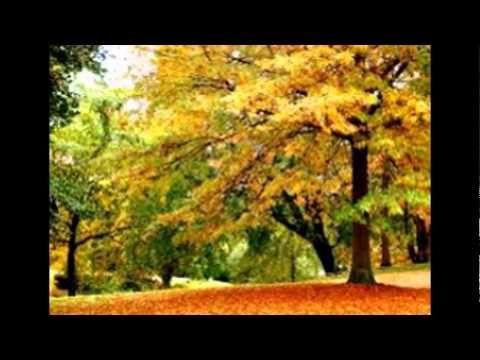 Last Minute Winter Leaf Pickup | Alpine Landscaping