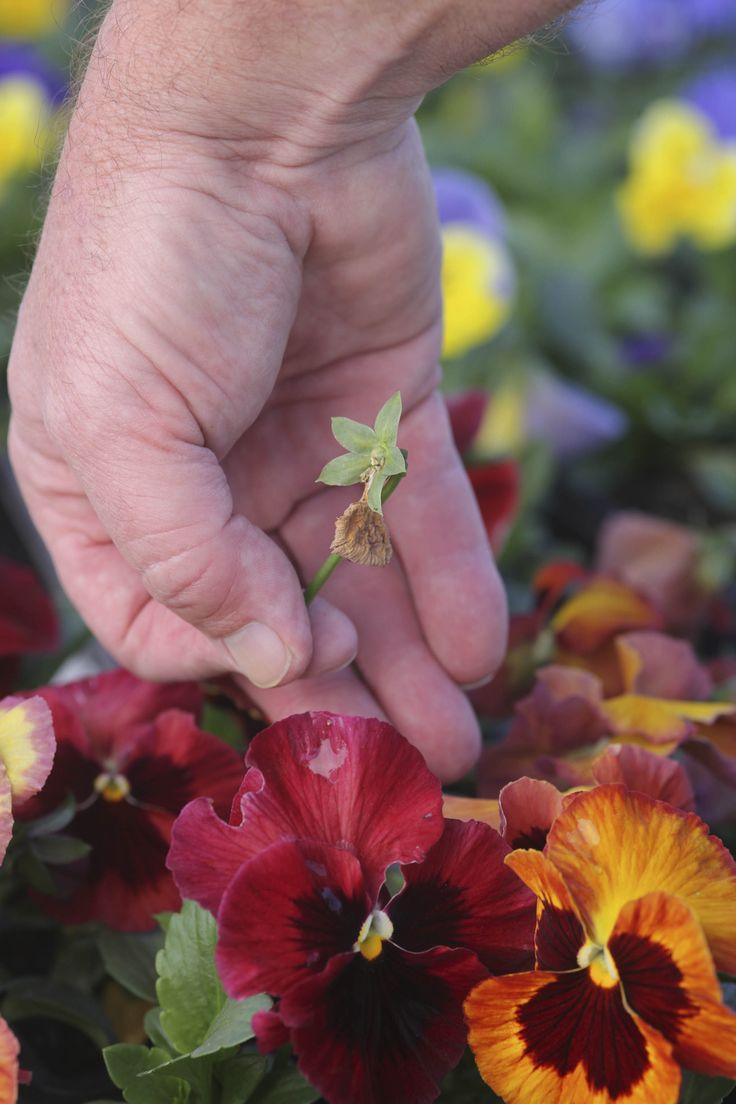 September in the SA Garden #SpringGardening