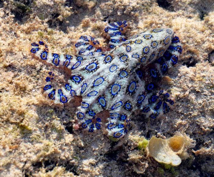 намаз, морские животные австралии картинки лицевой