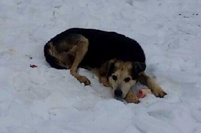 Πόσα θα θυσιάζατε για να σώσετε ένα αδέσποτο; Η 40 χρονών Denise Lauffer έκανε το ακατόρθωτο για να σώσει ένα αδέσποτο ηλικιωμένο σκυλάκι. Στην Νέα Υόρκη στο Μανχάταν Highland Park, ζούσε για δέκα χρόνια ο Τσάρλι ένας αδέσποτος σκύλος. Όταν μετακόμισε σ' εκείνη την περιοχή η Denise αμέσως τον πρόσεξε. Εκείνη έχει τέσσερα σκυλιά πρώην αδέσποτα και γνωρίζοντας την κατάσταση των αδέσποτων σκύλων, την μοναξιά και την πείνα τους, δεν μπορούσε να ησυχάσει στην ιδέα πως υπήρχε στο πάρκο κοντά της…