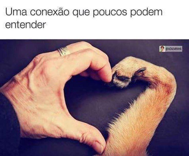 AMOR PLENO!❤❤ #amocachorro #amoanimais #luludapomerania #viralata #bulldogfrances #cachorro #cachorros #cachorroterapia #caopanheiro #cachorroterapia #gato #pug #labrador #golden #schnauzer #maltes #shihtzu #petmeupet