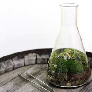 Isn't this a great idea? Chemistry At Work Terrarium now featured on Fab.