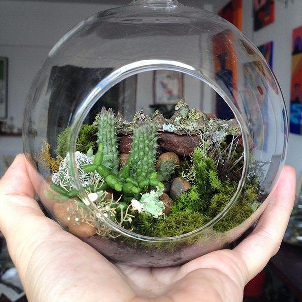 mini jardim terrario : mini jardim terrario: no Pinterest