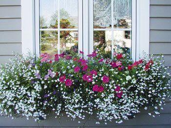 Best 25+ Window boxes summer ideas on Pinterest | Hanging ...