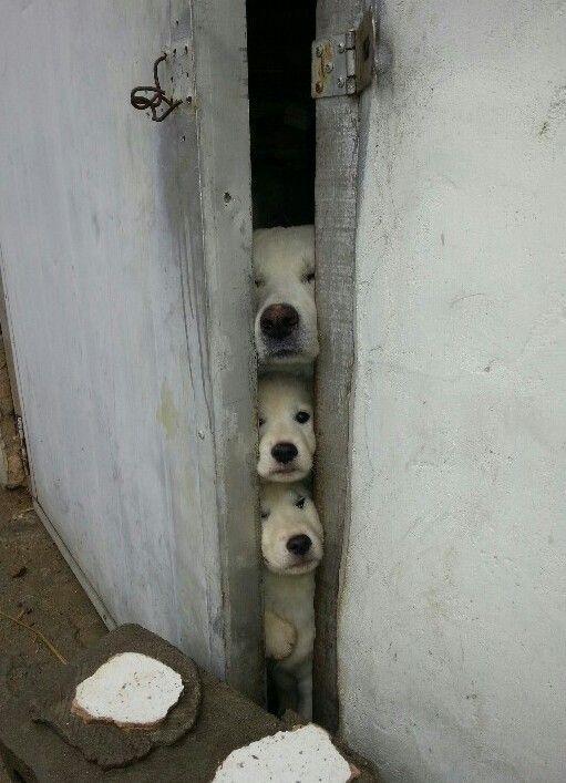 밖에 무슨일있어?