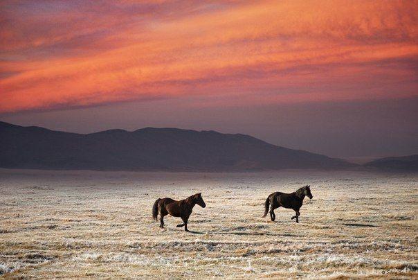 Дикие лошади в долине, Шотландия, Великобритания