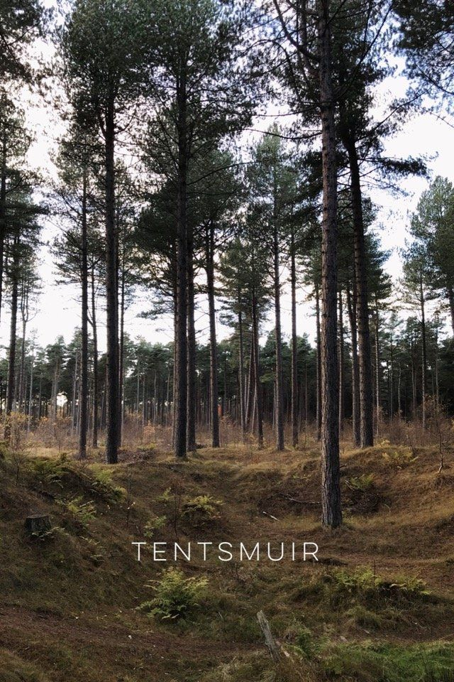 A winter walk at Tentsmuir, on @stellerstories.