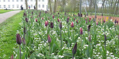 FORÅR I GRÅSTEN / Spring in Gråsten Denmark