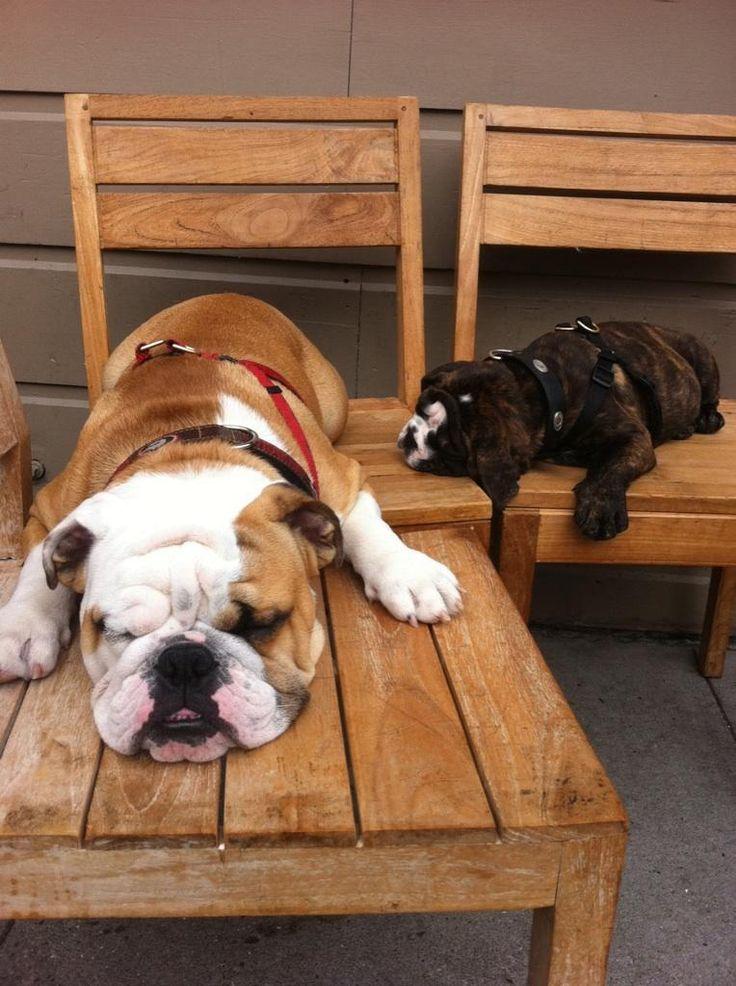 I love Bulldogs! https://www.facebook.com/BigBulldogs