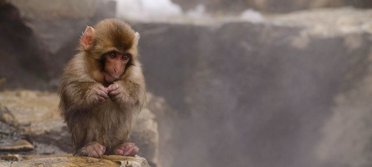 Onsens & Snow Monkeys, Nagano, Japan
