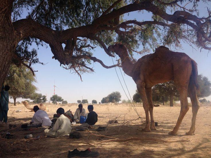 An incredible lunch under a tree on our desert safari in Thar desert outside Jaisalmer, India