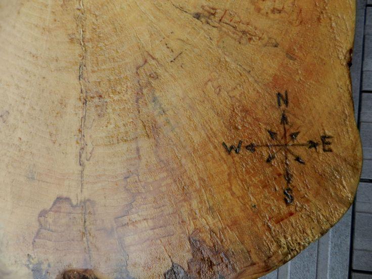 Tree Rings- All around the globe