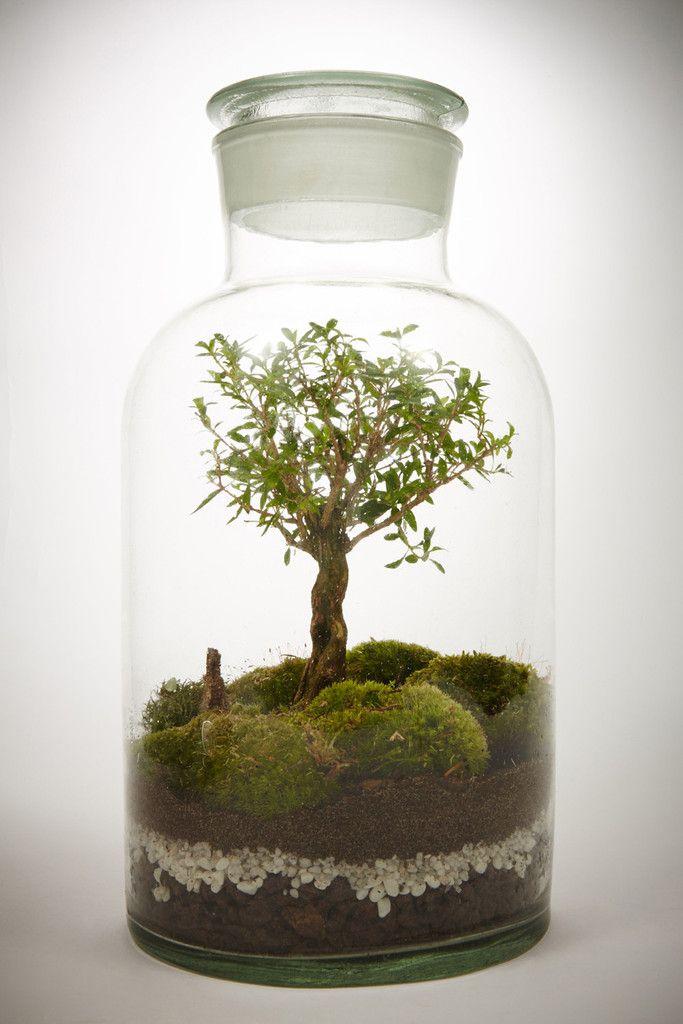 Les terrariums bonsaï de Green factory.  On vous conseille vivement d'aller visiter leur site qui propose des multitudes de terrariums nouvelle génération de toute beauté !