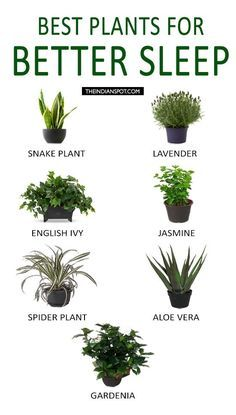 Best 25 bedroom plants ideas on pinterest bedroom for How to keep spiders out of your bedroom