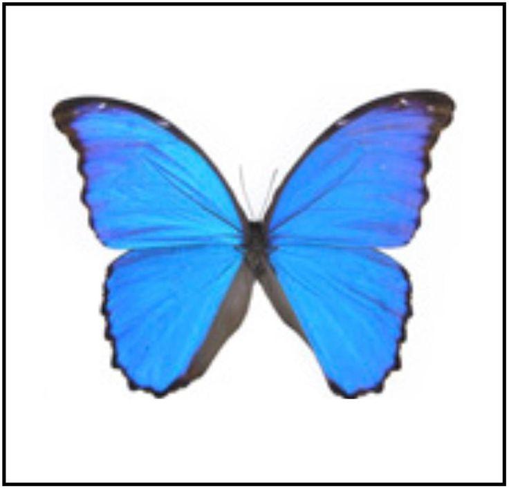 "Acrylic Display Box - Blue Morpho - 8"" X 8"" - #90008-06"