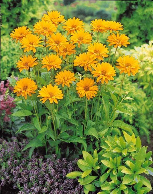 36 Best Mini Plantes Pour Petit Jardin Images On Pinterest