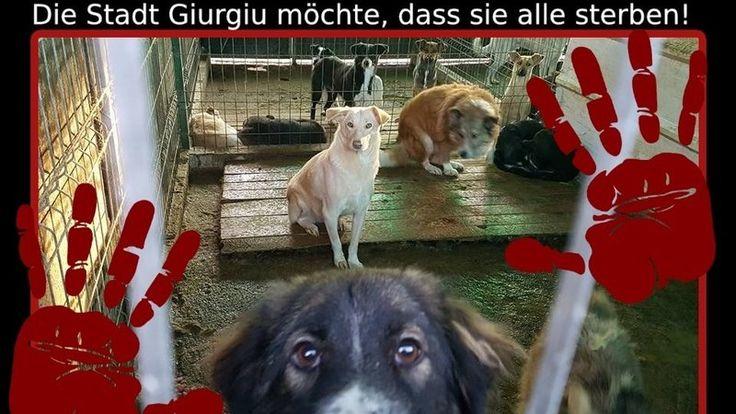 Petition · Nicolae Barbu: bitte verhindern Sie die Euthanasie von Hunden im Tierheim Giurgiu/Rumänien · Change.org