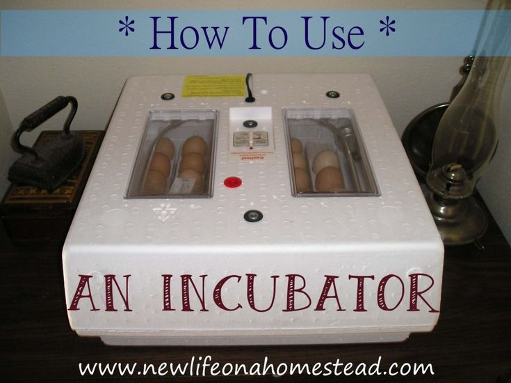 How To Hatch Chicks In An Incubator- Everything you need to know about hatching chicks! from http://newlifeonahomestead.com