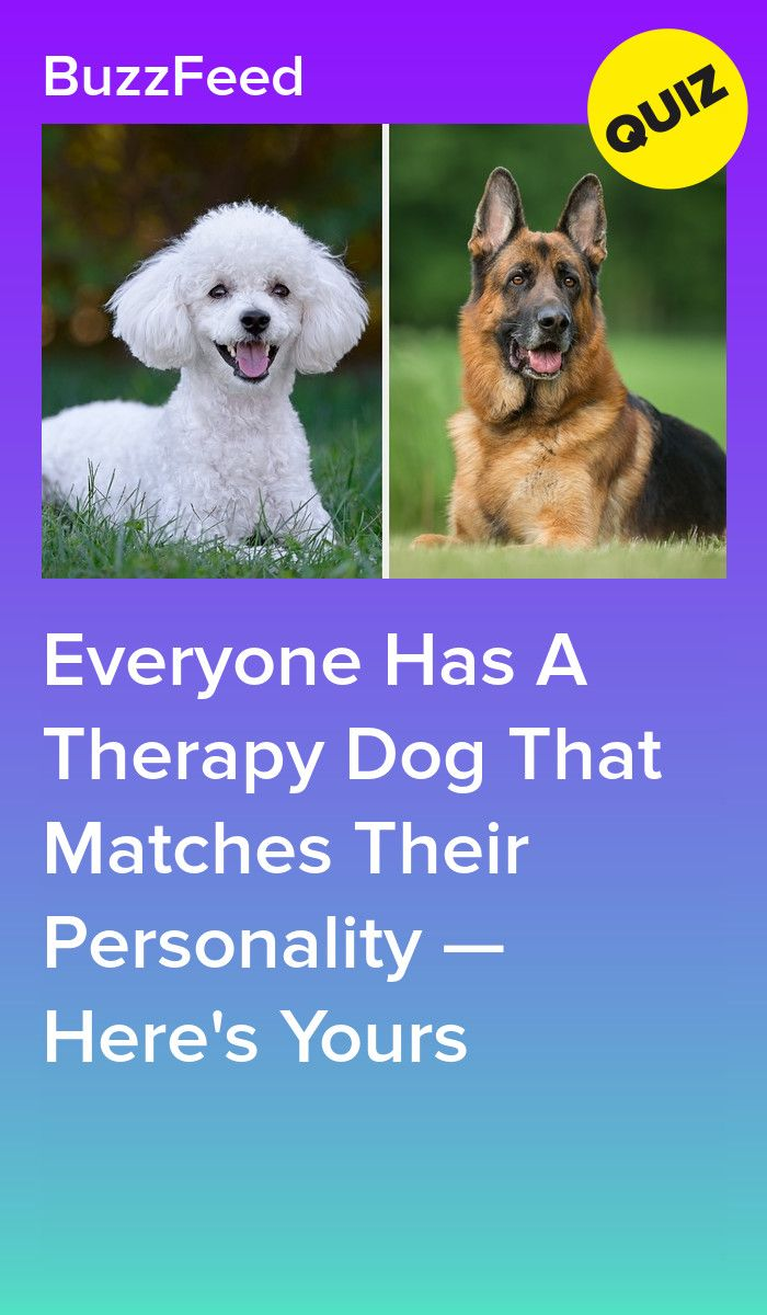 Can We Guess What Kind Of Therapy Dog You Would Be Dog Quiz Therapy Dogs Dog Quizzes