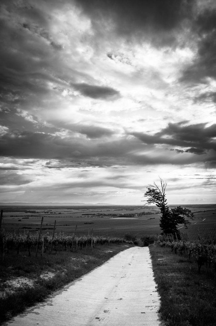 Vineyard road by Gabor Gonczol on 500px