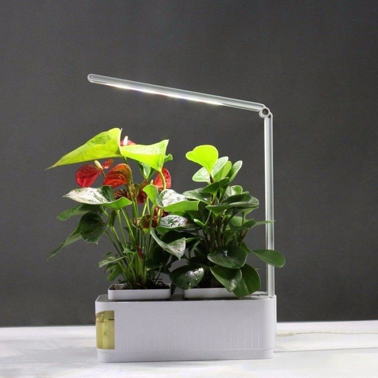 Smart Indoor Plant Herb Garden Hydroponic System Kits Grow