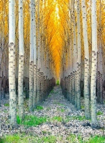 Nature doesn't really do much in straight lines, but it makes for some interesting photos - this in Vail, colorado
