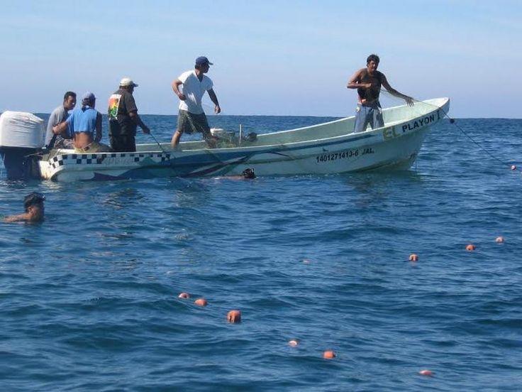 Jaime Rodríguez López, declaró que la actividad pesquera y acuícola representa la posibilidad real del aprovechamiento sustentable de los recursos naturales e incrementa el ingreso de los acuicultores y sus ...