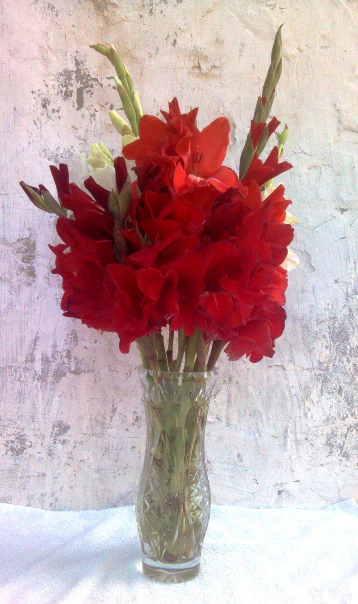 Красный букет гладиолусов Red and white