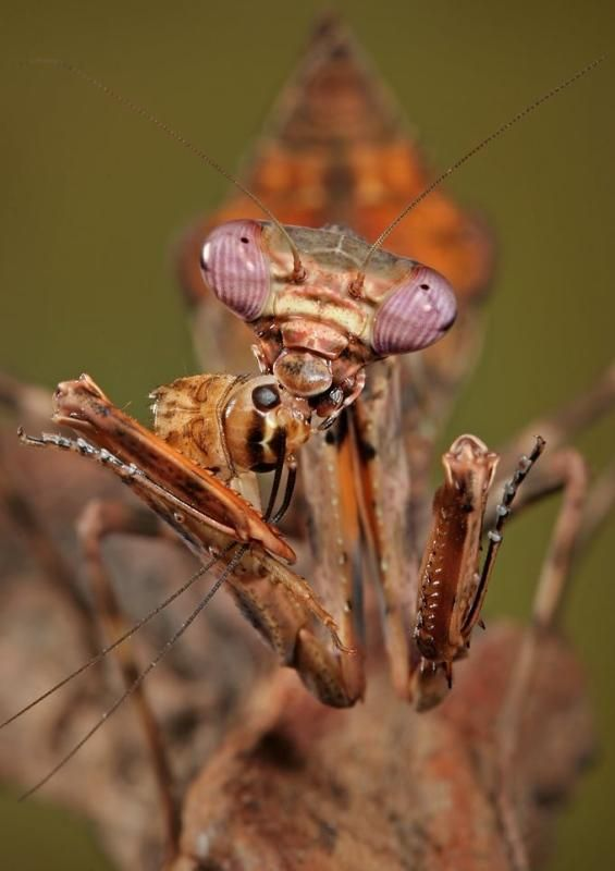 Mantis prays to Mother Nature and is rewarded with dinner