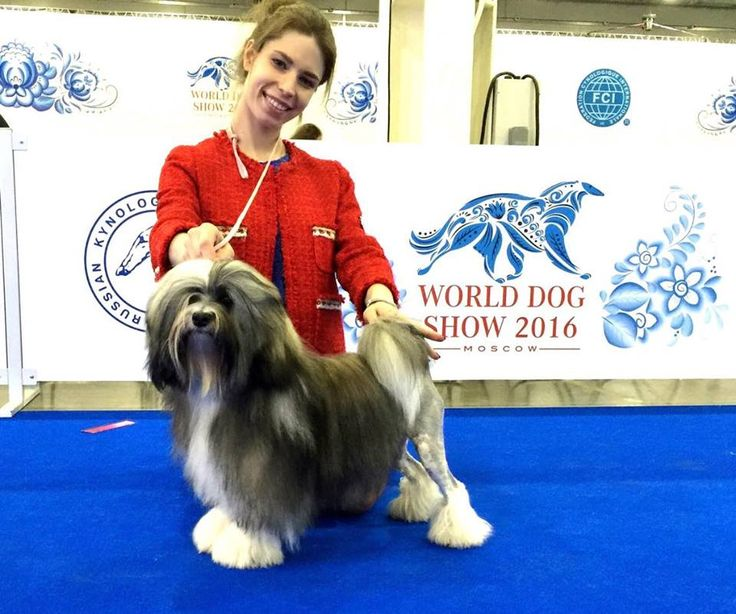 *** JUNIOR WORLD WINNER 2016***  LTJW-16 Silver Coat's Royal Queen  Judge, Rafael De Santiago Thanks to Ilpo ojala  and Sanna Lindholm for that great work and Thanks to  handler Anna Paretskaya