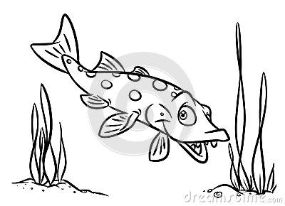 Superbe Fish Predatory Pike Coloring Pages Isolated Image Animal Character
