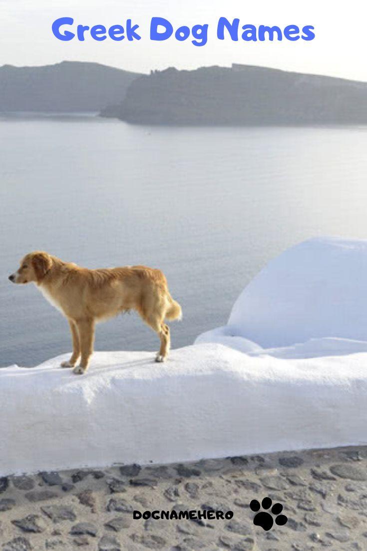 Greek Dog Names Dog Name Hero Dog Names Ancient Dogs Dogs