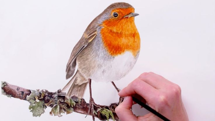 How to paint a detailed feathers on this orange chested Robin
