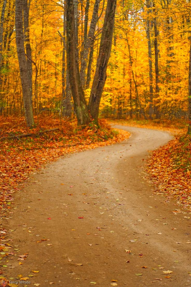 traverse city, michigan through the gorgeous fall colors. (My family was driving through Michigan in November, and just north of Cadillac, we went through an area like this. It literally took my breath away!