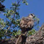 Martial Eagle I Love Kruger Park