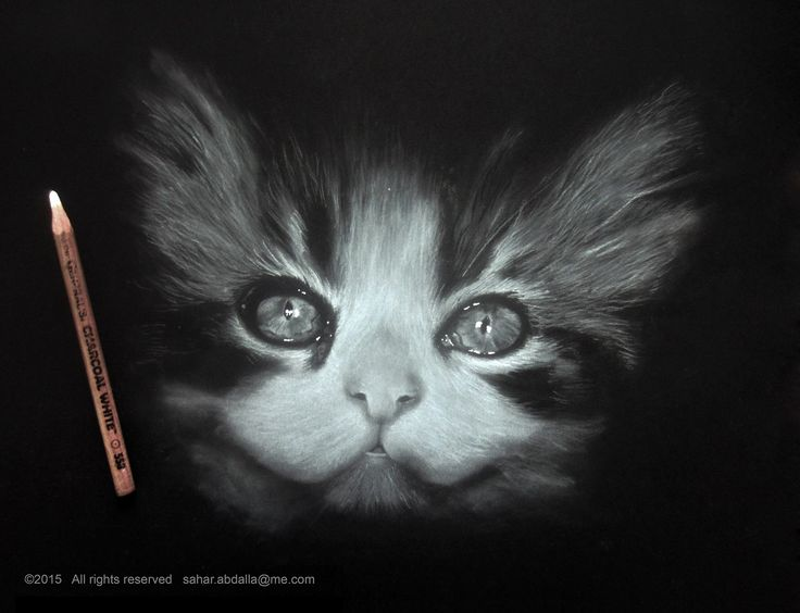 Drawn only with white charcoal on black paper. No black pencils used, just an easer. #kitten #cat #art #blackandwhite #drawing #baby #animal #portrait #monochrome #art - Instagram @Xtra_Gravity