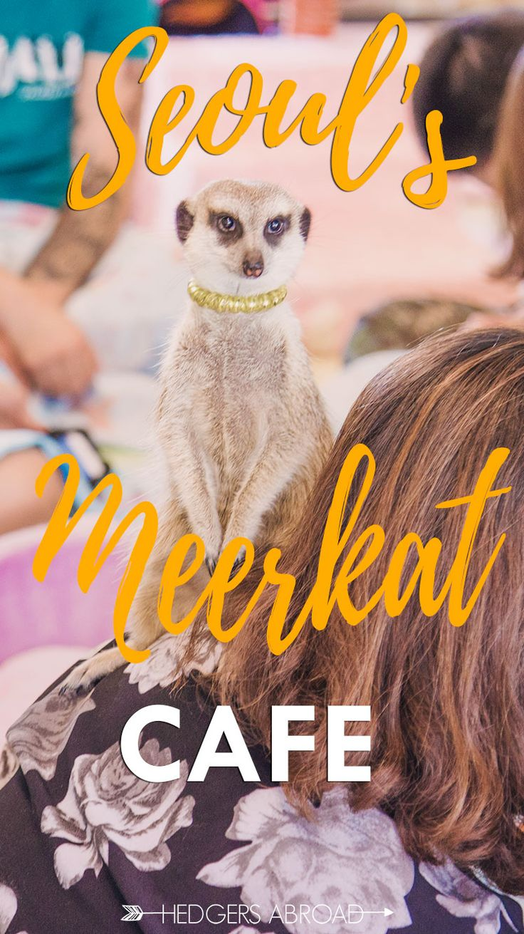 Only in Korea // SEOUL MEERKAT CAFE