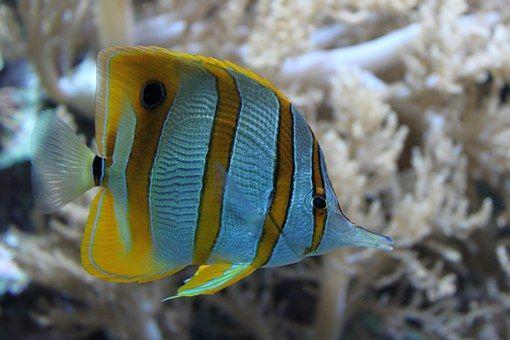 Fish, Ocean, Nature, Underwater