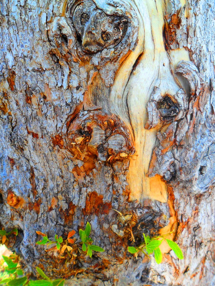 41 Best Images About Wood Amp Bark On Pinterest Taxus