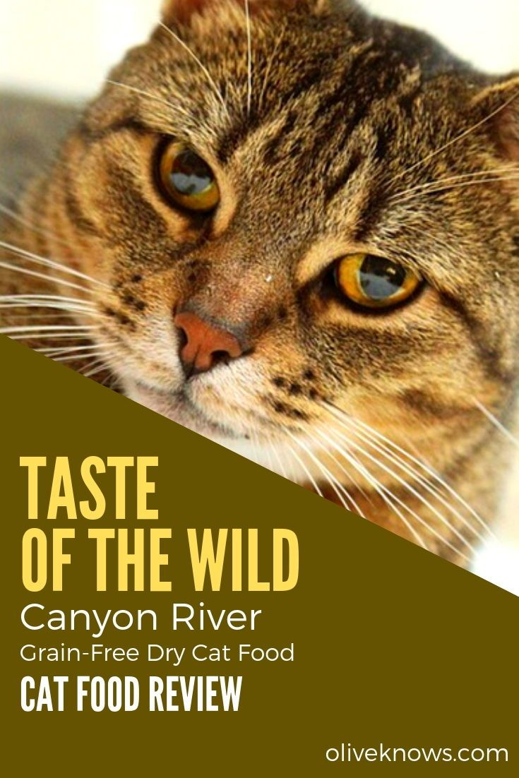 Taste Of The Wild Canyon River Grain Free Dry Cat Food Oliveknows Dry Cat Food Cat Food Cat Food Reviews