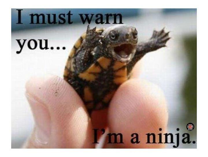 : Animals, Funny Stuff, Things, Ninja Turtles, Ninjas, Funnie