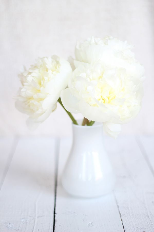 simple white peonies (via yourstrulypaper)