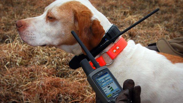 Global Pet Tracking Systems Sales Market 2017 - Link AKC, Tractive, Marco Polo, Tractive, PitPat - https://techannouncer.com/global-pet-tracking-systems-sales-market-2017-link-akc-tractive-marco-polo-tractive-pitpat-2/