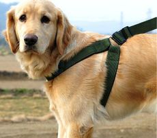 Army green adjustable Harness $20.00