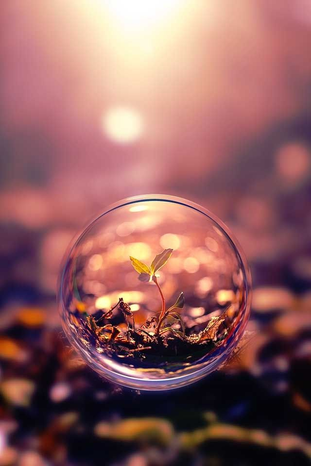 Sapling seen through a Drop of water