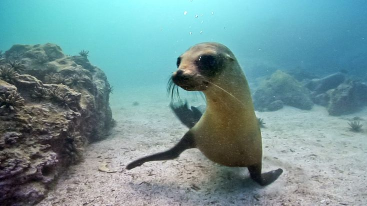 Underwater Nature & Marine Life   Stock Footage Showreel (Demo Reel) HD - YouTube